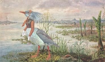 Greyorangeladybird