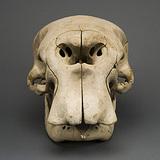 Forest_elephant_skull_1